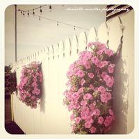 Flowers on fence greenport copy
