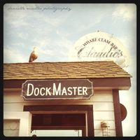Dock master greenport copy
