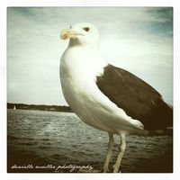 Stately seagull greenport copy