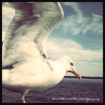 Vivid seagull greenport copy