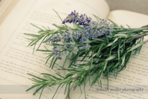 LavenderBook 1