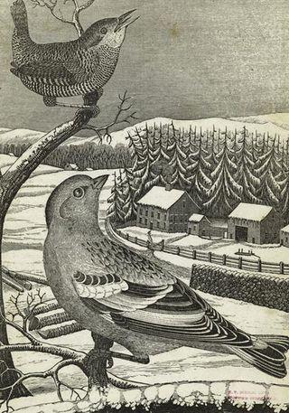 Winter Wren copy