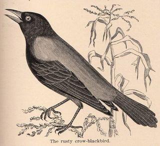 Crow TGF