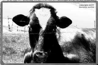 BWCow