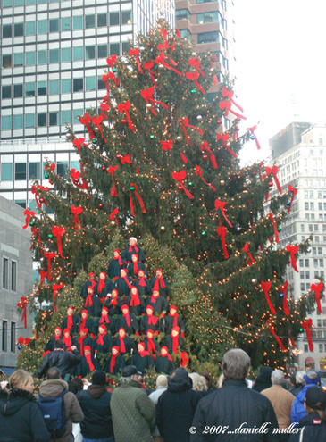 Tree_at_south_street_seaport