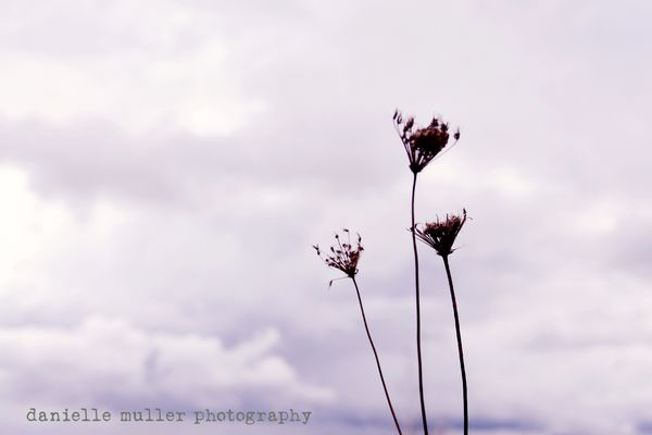 Dried flowers against sky