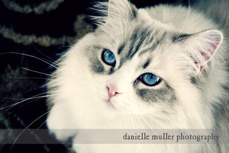 MCP Project 52 Week 5 Danielle Muller