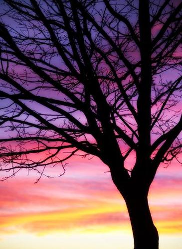 Sunsettree