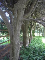 Old_westbury_gardens_may_2005_49