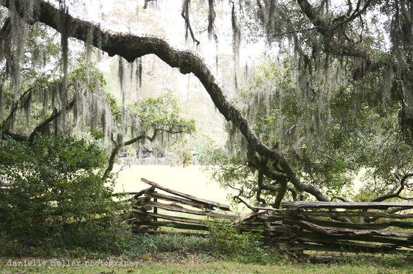 Magnolia plantation 7