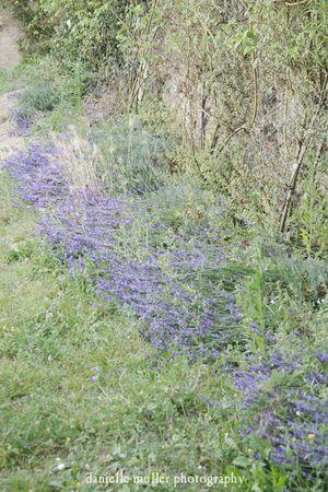 Lavender at CD
