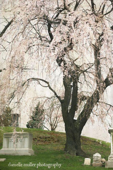 Greenwood Cemetery 5