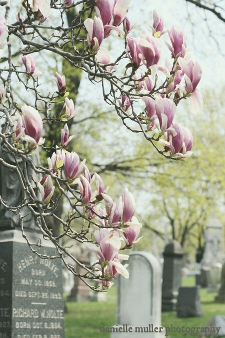 Greenwood Cemetery 10