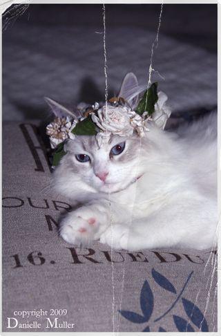 PrincessLily1