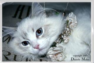 PrincessLily3