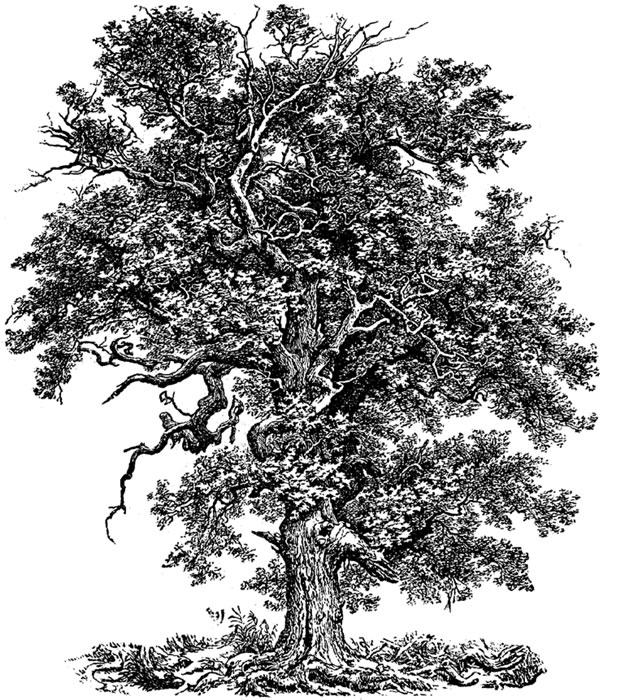 B & W Tree 1