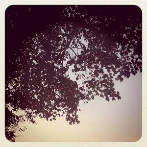 Tree silhouette 10.14.11