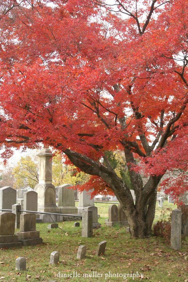 Sleepy Hollow Cemetery 6