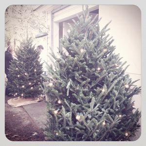 Tricia foley {Christmas trees}