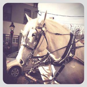 Horse in port jeff