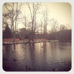 Stony brook pond