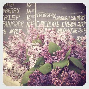 Lilacs @ briermere