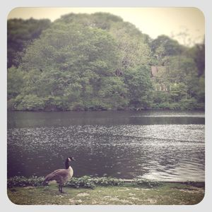Goose @ grist mill