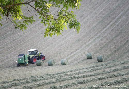Hay Field 1