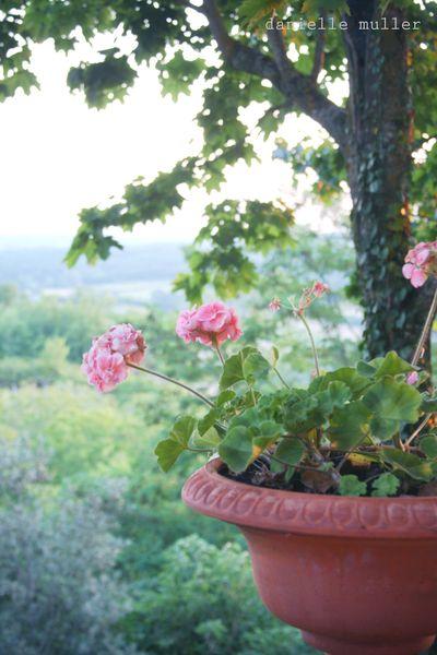 Geraniums on veranda