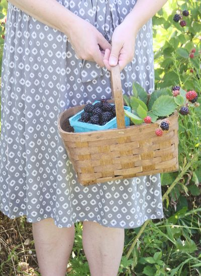 Blackberry picking 9