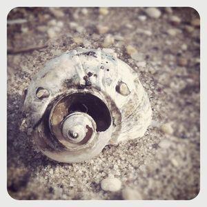 Shell at laurel beach