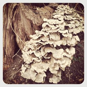 Tree fungus 2