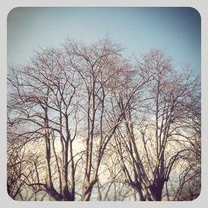 Bare trees 1
