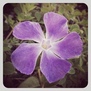 Purple flower in california