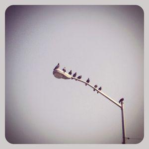 Birds on light pole