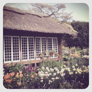 Old westbury gardens 2