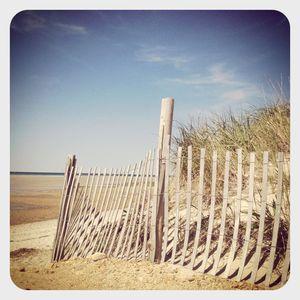 Dunes @ chapin beach, cape cod