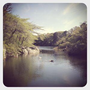Stony brook pond, cape cod