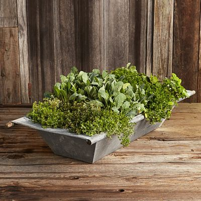 Galvanized trough WILLIAMS SONOMA