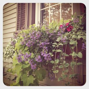 Windowbox in port jeff
