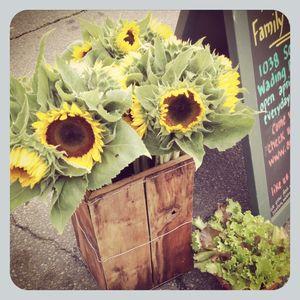 Sunflowers @ pj market