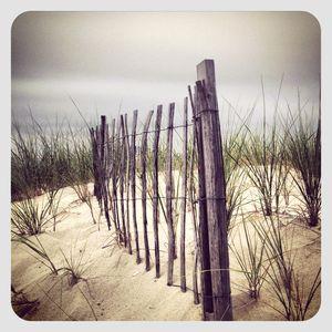Dunes in cape cod