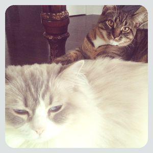Lily & Rocky