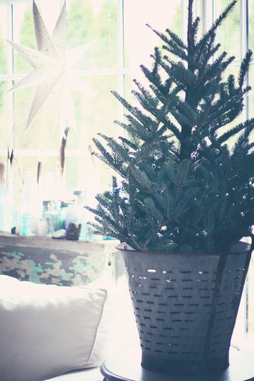 Tree in bucket 2