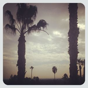 California palms framed