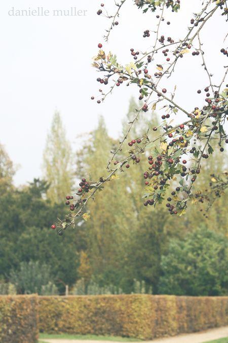 Berries at Versailles