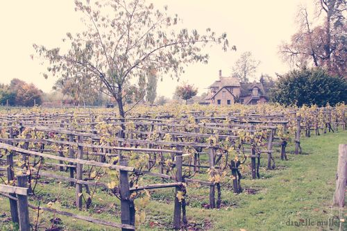 Vineyard at Queen's Hamlet