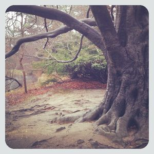 Tree @ frank melville park
