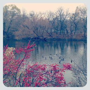 Central park 1