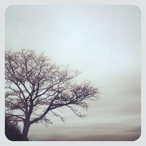 Tree in stony brook 1